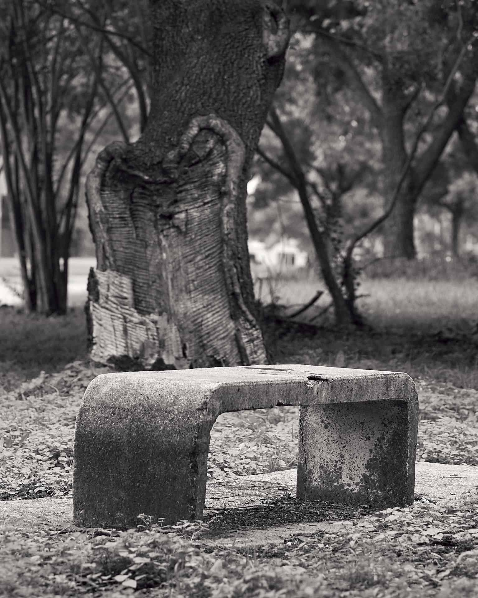 An old bench in front of a tree.