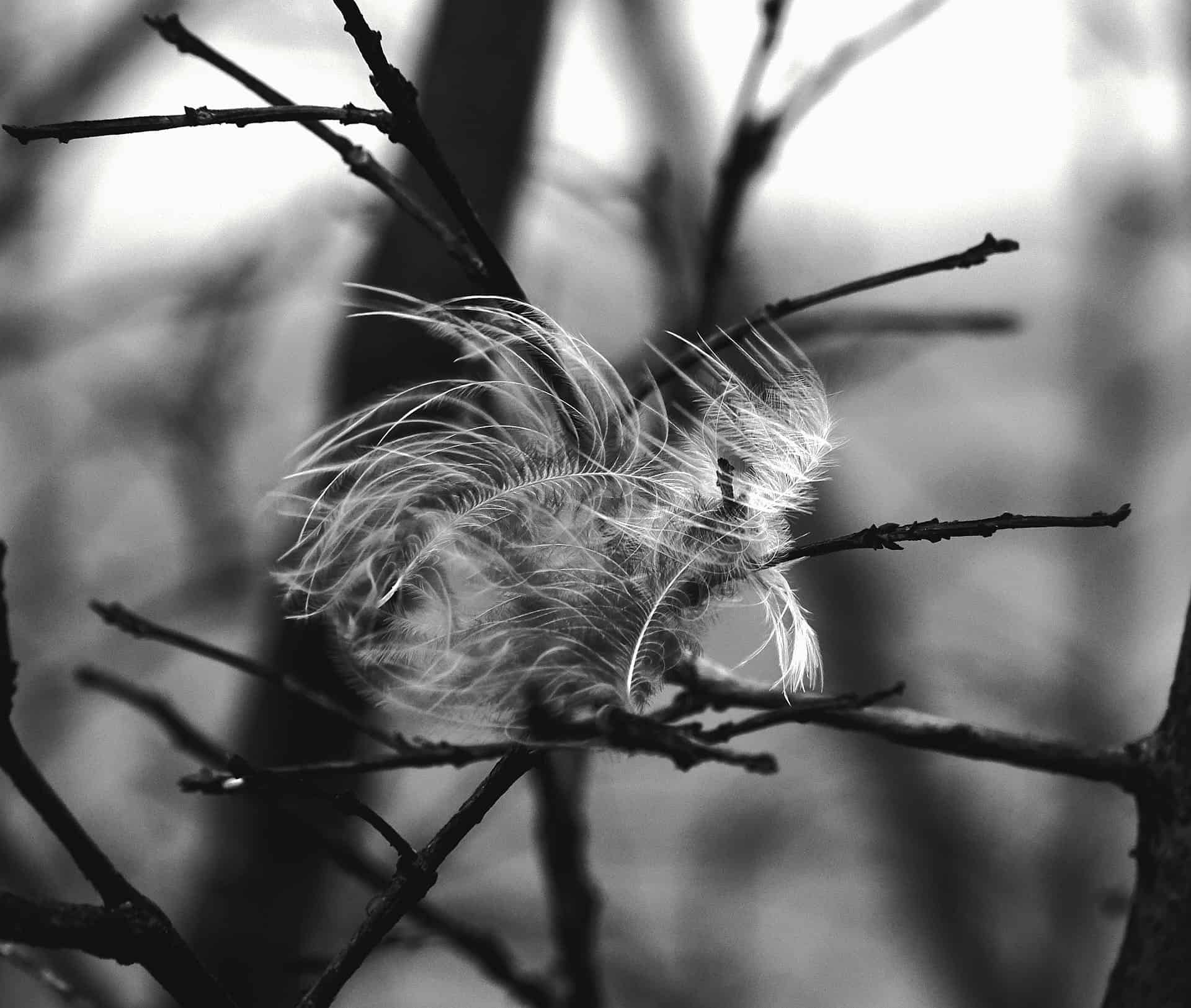 Feather on a branch blowing in the wind