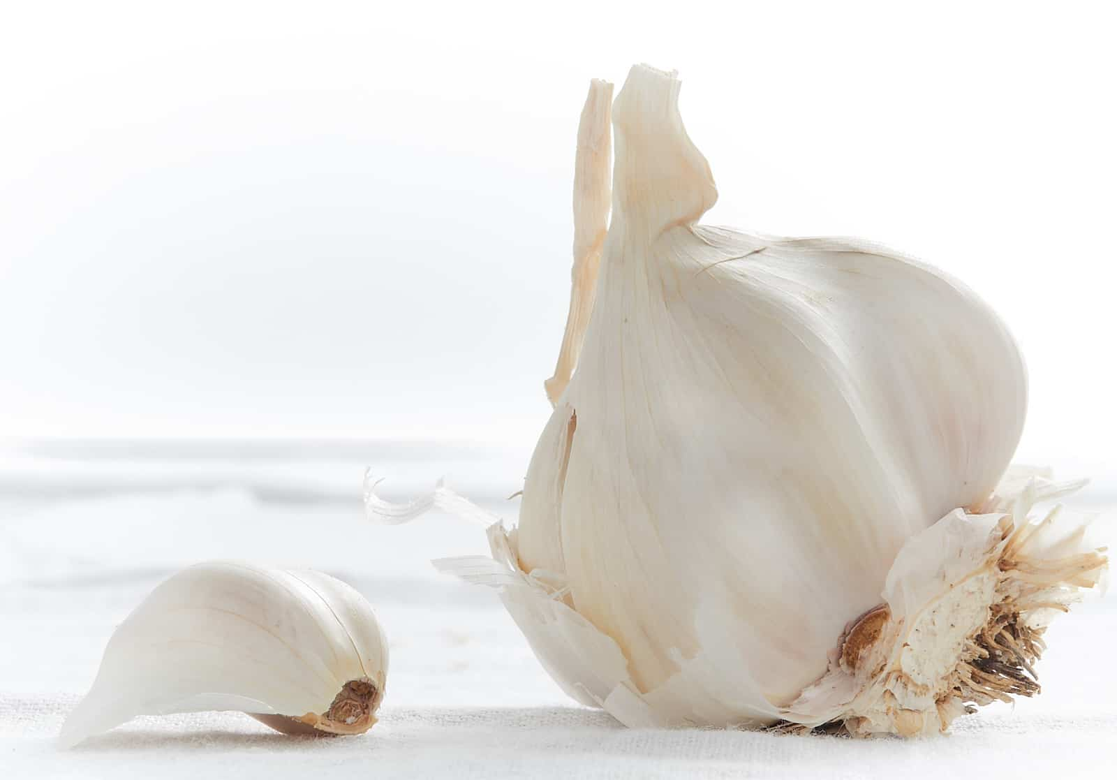 Garlic bulb and clove on white background.